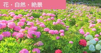 花・自然・絶景